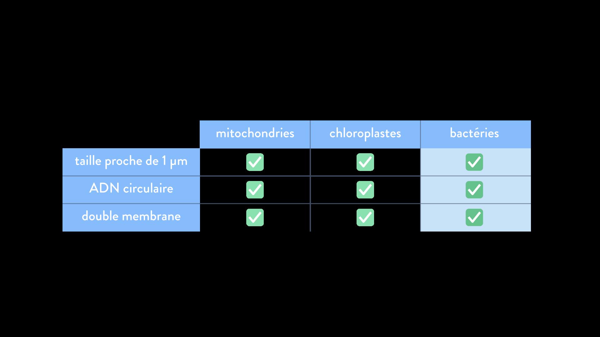 endosymbiose bactérienne bactérie chloroplaste mitochondrie évolution transfert horizontal