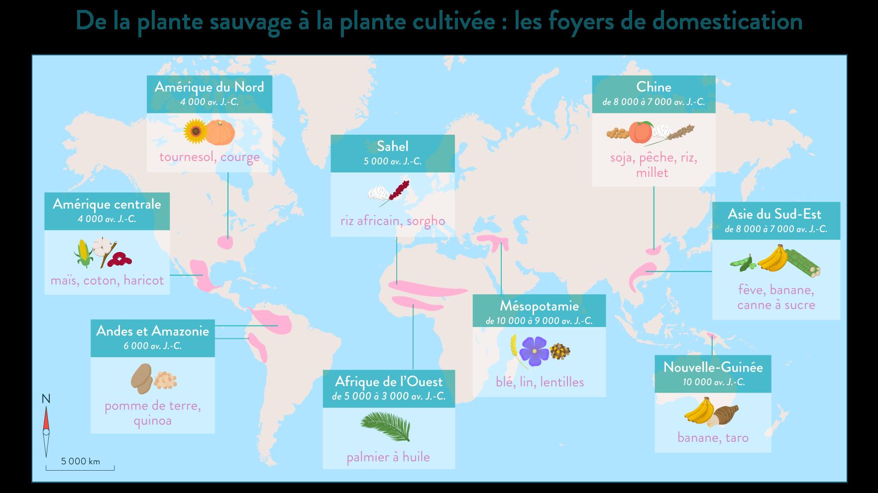 Plante sauvage plante cultivée foyers de domestication monde